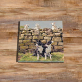 Pet lambs and sheepdogs Glass drinks Coaster - Cheeky Pet Lambs - Kitchy & Co