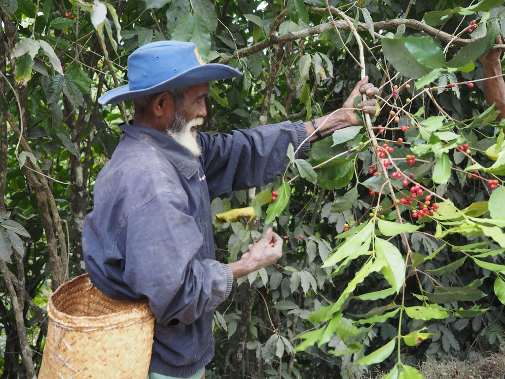 Forest where coffee is grown