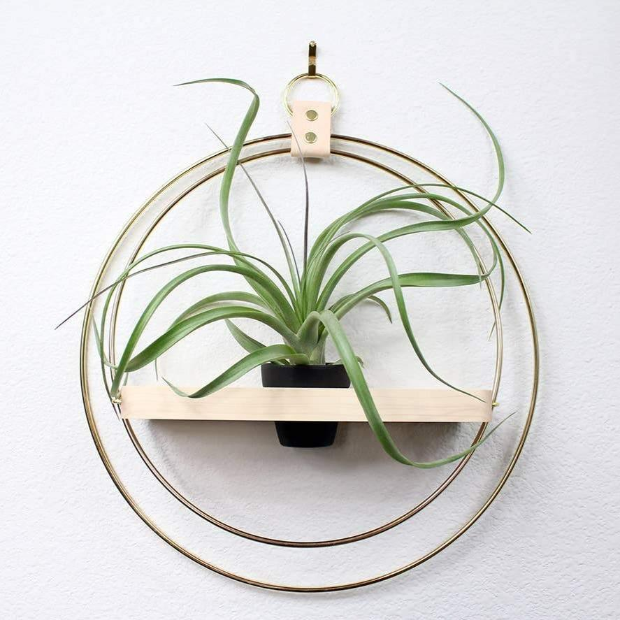 HANGING RING PLANT SHELF