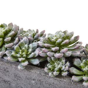 "Load image into Gallery viewer, 5.5"" SUCCULENT GARDEN WITH TEXTURED CONCRETE PLANTER"
