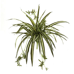 "Load image into Gallery viewer, 23"" SPIDER PLANT BUSH, SET OF 4"
