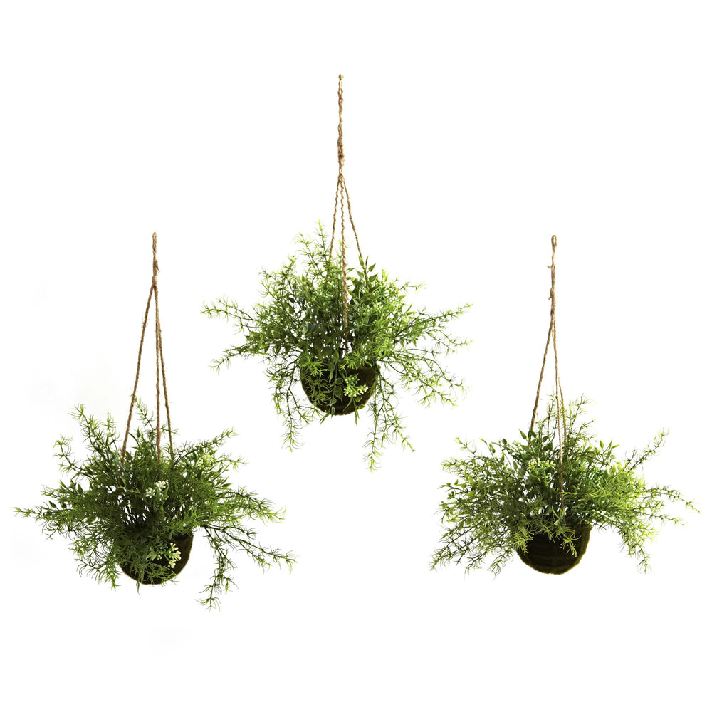 RUSCUS, SEDUM & SPRINGERI HANGING BASKET, SET OF 3