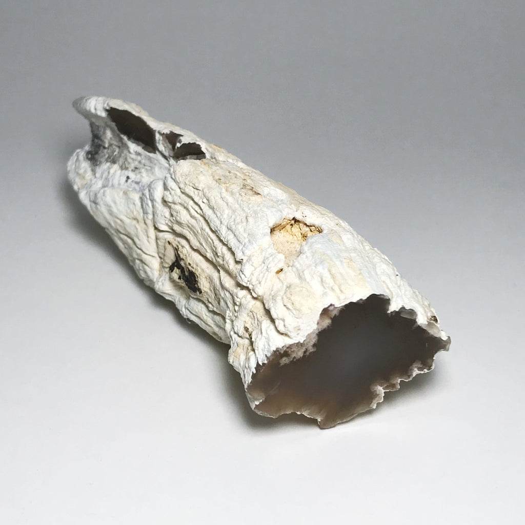 Humbolt Willow Petrified Wood