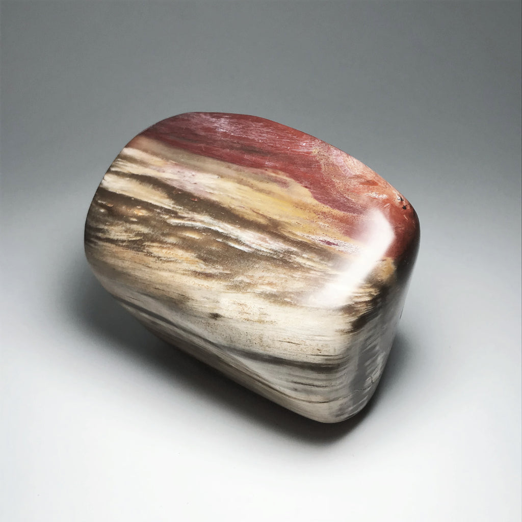 Araucaria Petrified Wood