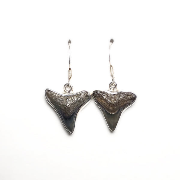 Megalodon Shark Teeth Dangle Earrings