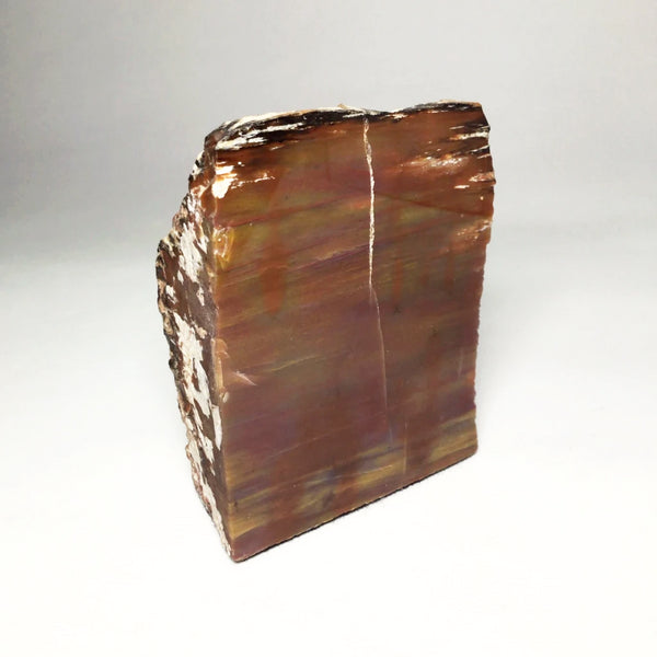 Stand Alone Araucaria Petrified Wood Slab