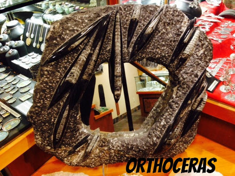 Orthoceras Mirror