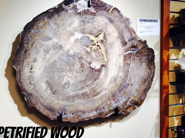 Petrified Fir Wood Slab
