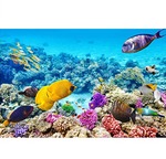Load image into Gallery viewer, 1000 Pieces Puzzles for Adults Ocean World Jigsaw Puzzles Challenging Puzzle Large Difficult Fish Animals Puzzles Kids DIY Toys Gift for Home Decor
