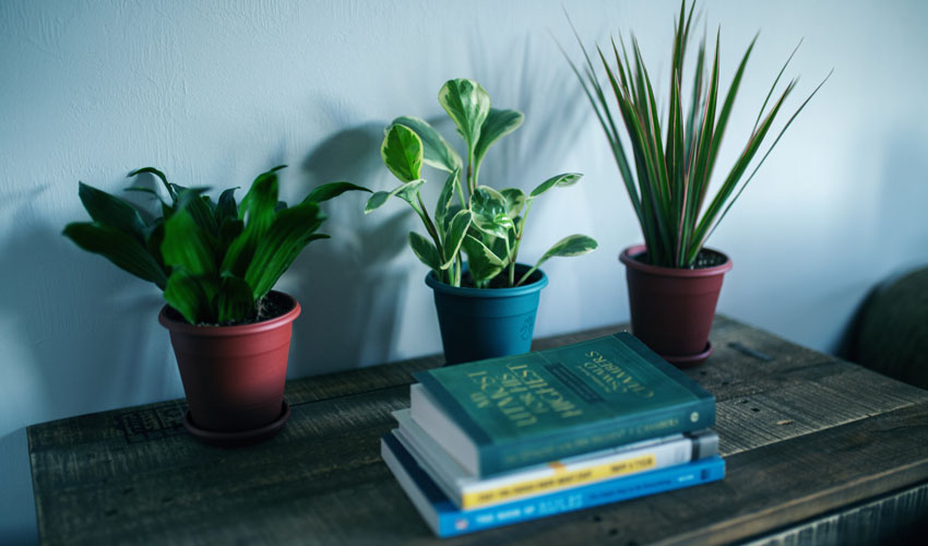 Best indoor plants for allergies