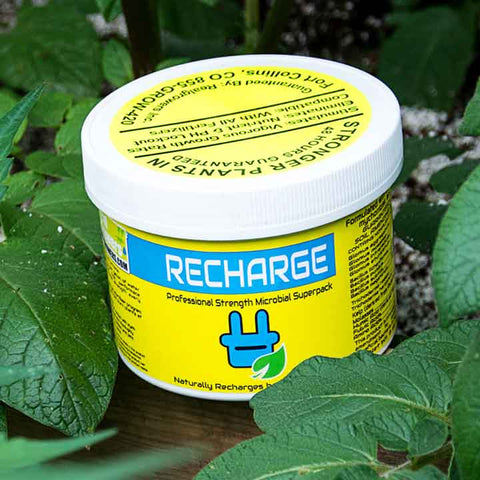 Recharge Microbial Superpack, 8oz