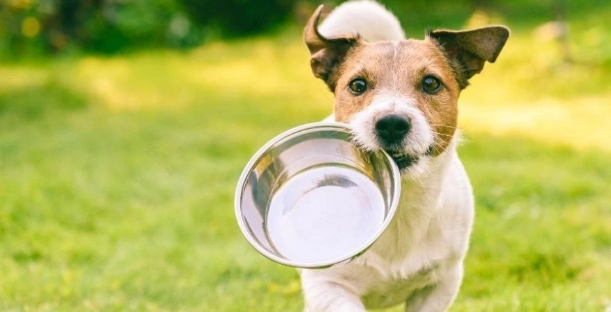 Dog holding a food bowl in his mouth
