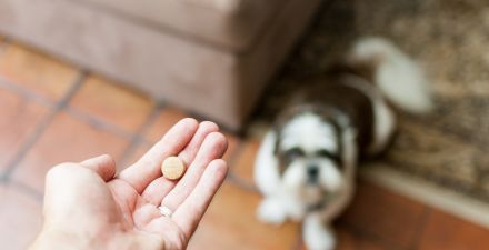 Person holding a pill in her hand while a dog watches from below