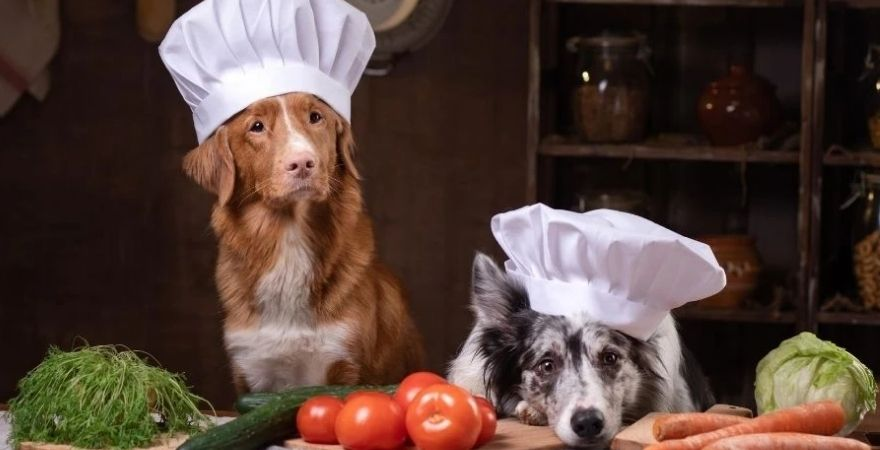 Dogs with chef hats on and food in front of them
