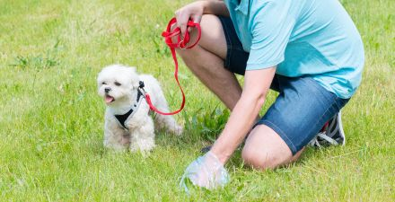 Person picking up bowel movement from dog