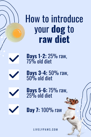 How to introduce your dog to raw diet