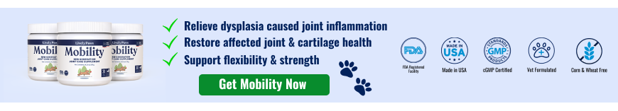 Solution for hip dysplasia - Lively Paws Mobility