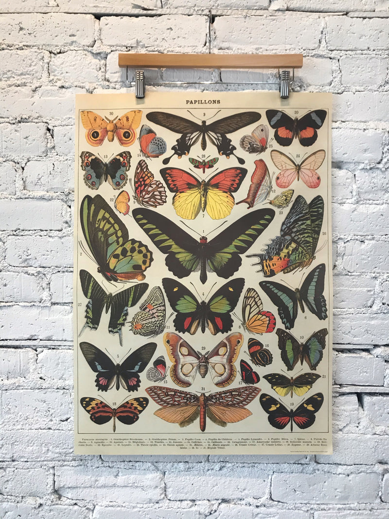 Papillons Poster