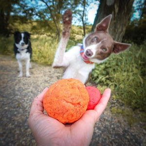 Wunderball - Best Fetch Toy