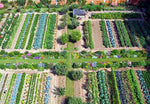 (Jumbo Garden) 75 Kinds Heirloom USA Seeds - Going Off Grid