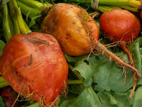 50 Yellow Beet Root Seeds - Going Off Grid