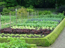 Load image into Gallery viewer, (Large Garden) 50 kinds Heirloom USA Seeds - Going Off Grid