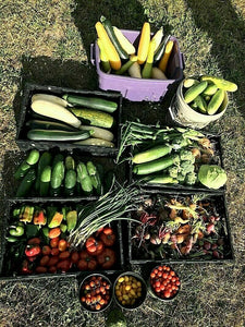 (Small Garden) 20 kinds Heirloom USA Seeds - Going Off Grid