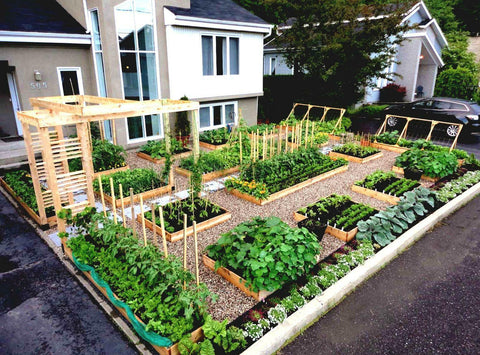 (Large Garden) 50 kinds Heirloom USA Seeds - Going Off Grid