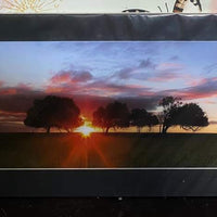 Unframed Photo Sunset between Trees