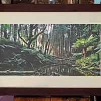 Framed photo of Rain Forest