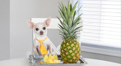 Can My Chihuahua Eat Pineapple