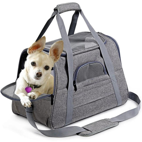 Chihuahua Carrier Airline Approved