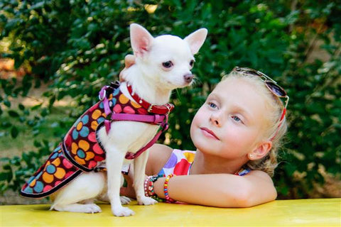 Chihuahua With Little Girl Chihuahua Empire Blog