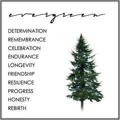 EVERGREEN TREE SYMBOLISM.  EVERGREEN TREE MEANING.