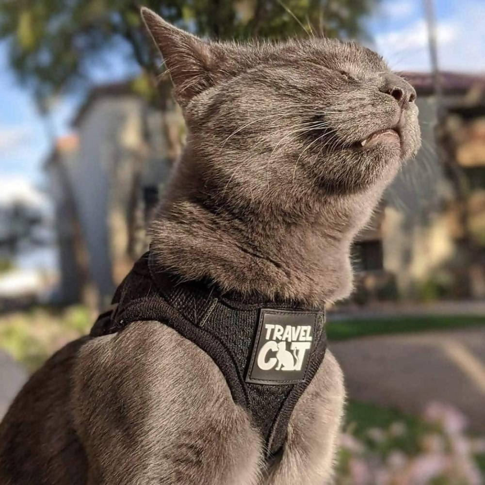 """""""The True Adventurer"""" Reflective Cat & Kitten Harness and Leash Set for Adventure Cats"""