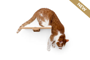 "Catastrophic Creations 12"" Cat Shelf"