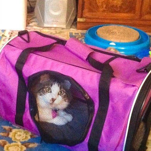 Base Camp Combo: Pet Carrier & Mesh Cat Crawl