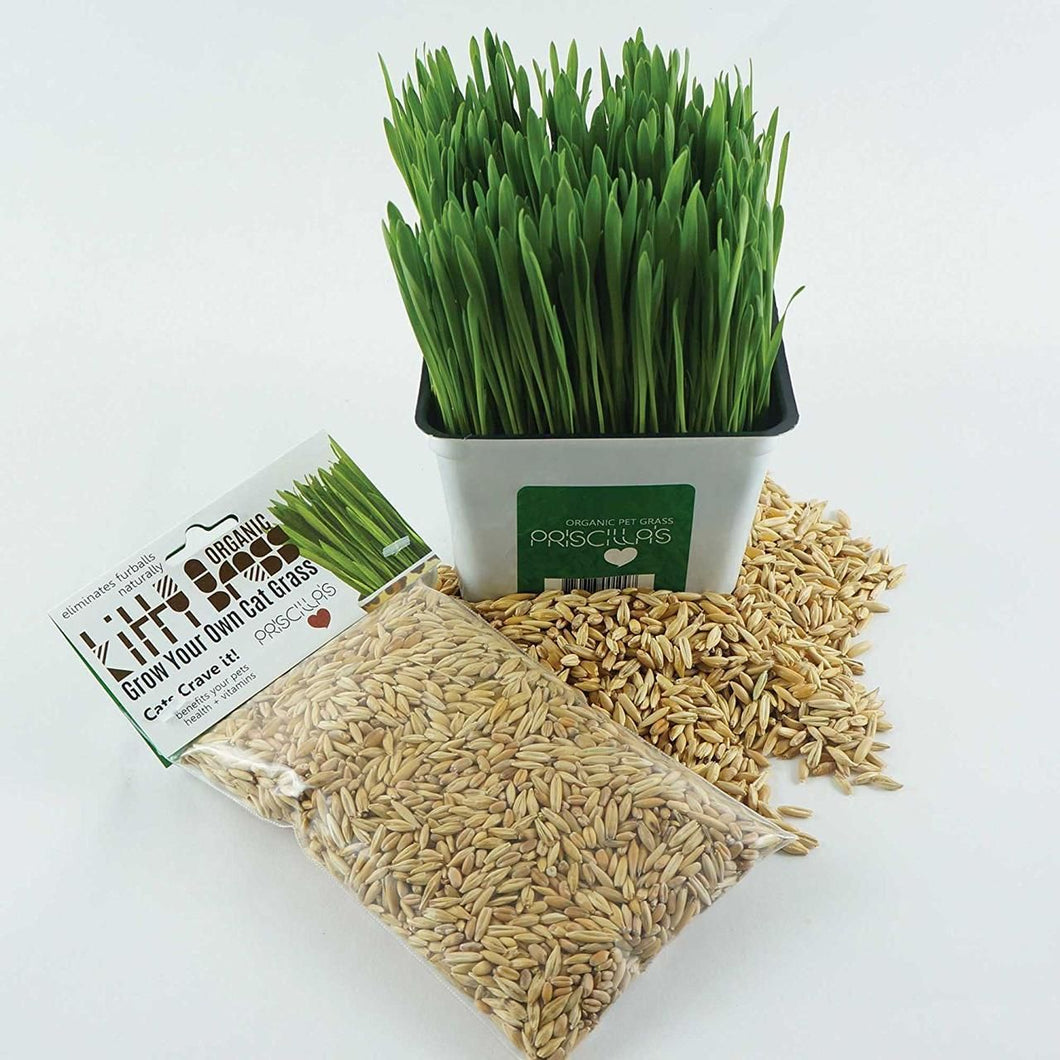 Priscilla's Grass Seed Pack 6oz