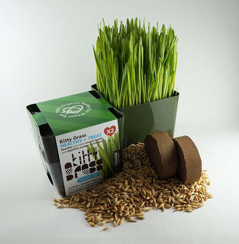 Priscilla's Grow Your Own Planter + Grass Kits (2x)