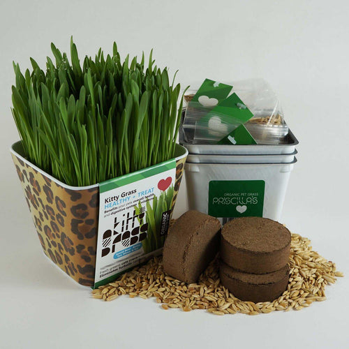 Priscilla's Grow Your Own Planter + Grass Kits (3x)