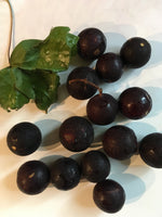 Load image into Gallery viewer, Wild Muscadine