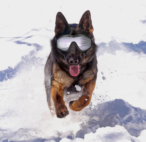 Protective Dog Goggles