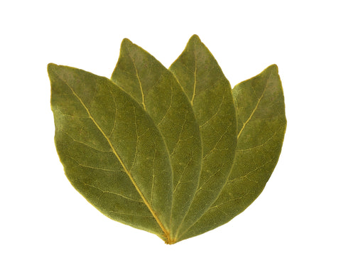 Bay Leaves Whole - Sunrise Botanics
