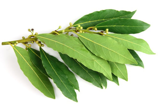 Bay Leaf  Essential Oil - Sunrise Botanics
