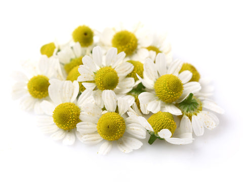 Chamomile Essential Oil (South Africa) - Sunrise Botanics