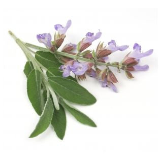 Clary Sage Essential Oil - Sunrise Botanics