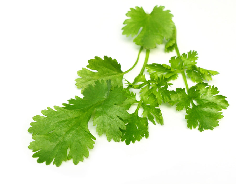 Coriander Essential Oil (India) - Sunrise Botanics