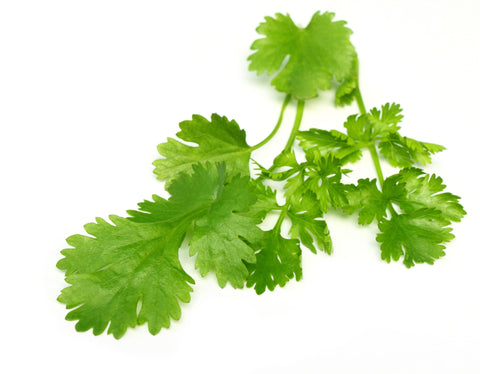 Coriander Essential Oil (Egypt) - Sunrise Botanics