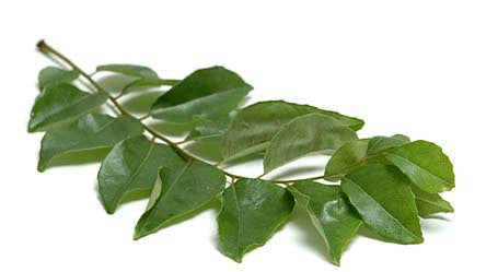 Curry Leaf Essential Oil - Sunrise Botanics