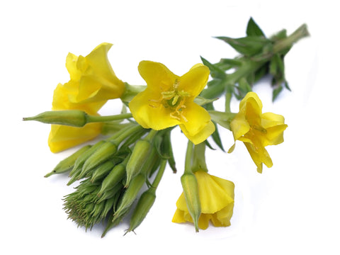 Evening Primrose Carrier Oil (Unrefined) - Sunrise Botanics